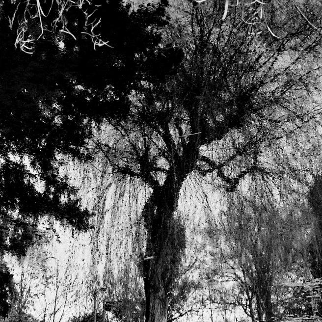 Coombe Wood © Stewart Weir 2012