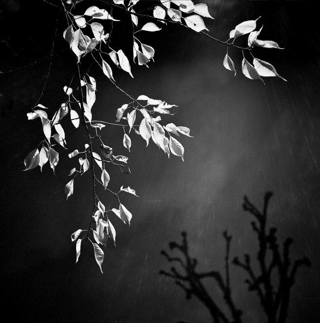 Rain, Acton © Stewart Weir 2012
