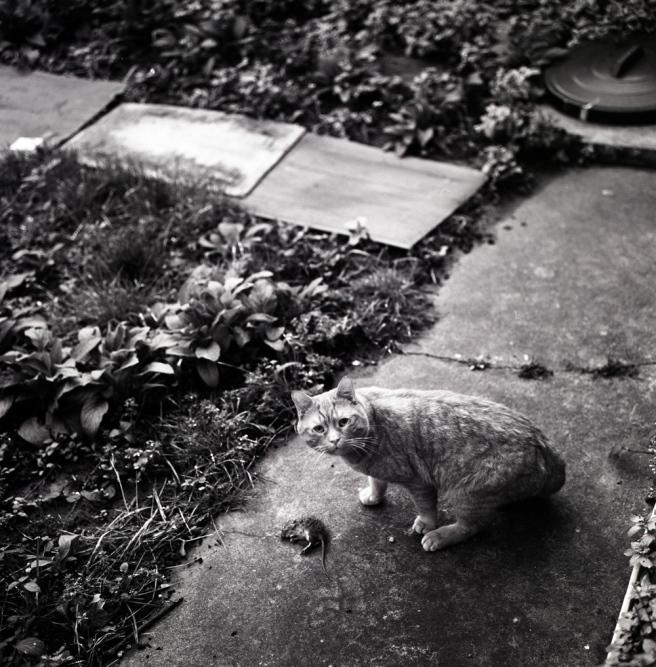 Petit Filous (Little Rascal) © Stewart Weir 2012