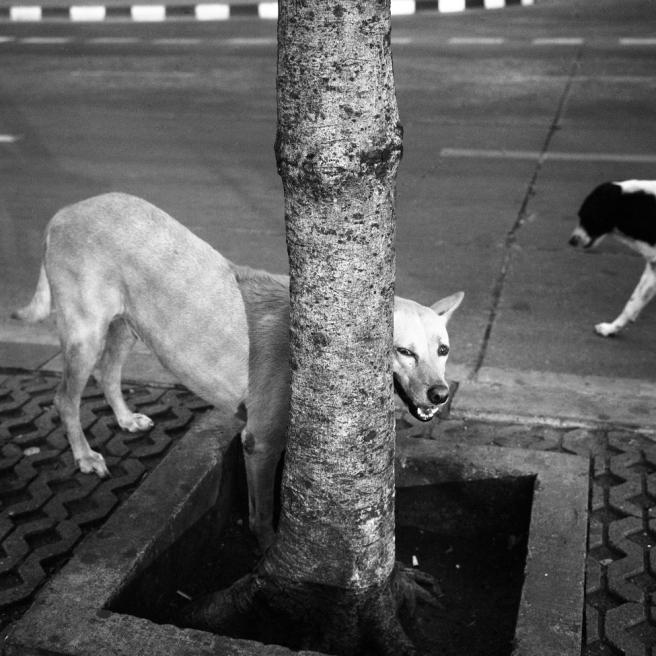 Bangkok_48_12_975pix